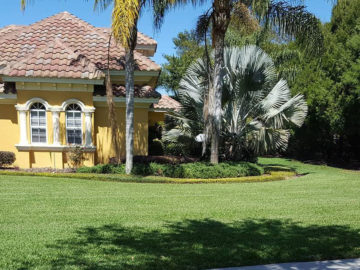 Nice Lawn and Shrubs