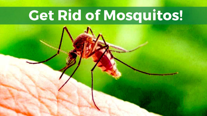 5 Handy Mosquito Control Tips for Homeowners