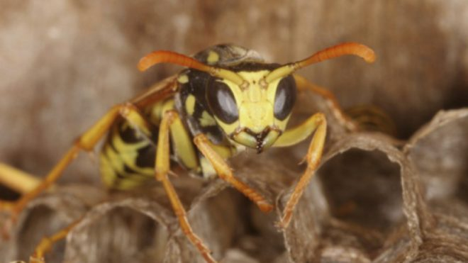 How to Keep Wasps Away This Fall