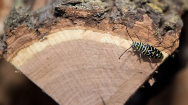 Top 5 Tips to Control Firewood Pests in Winter