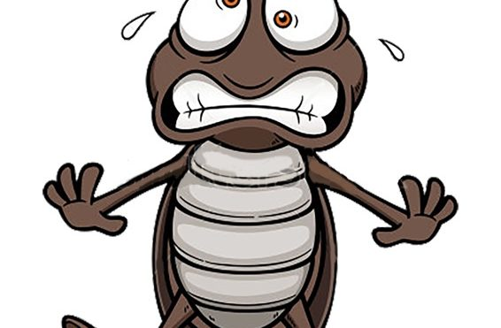 Safe & Effective Pest Prevention in Your Home