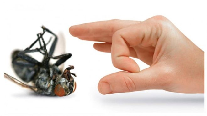 Super Successful Ways to Get Rid of Bugs