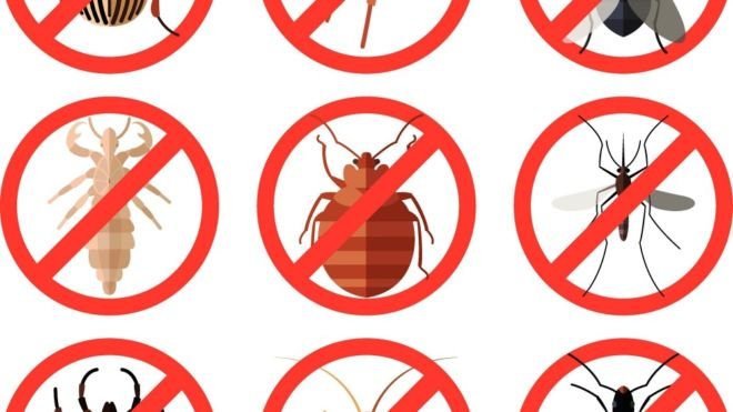 Protect Your Home from Summer Insects