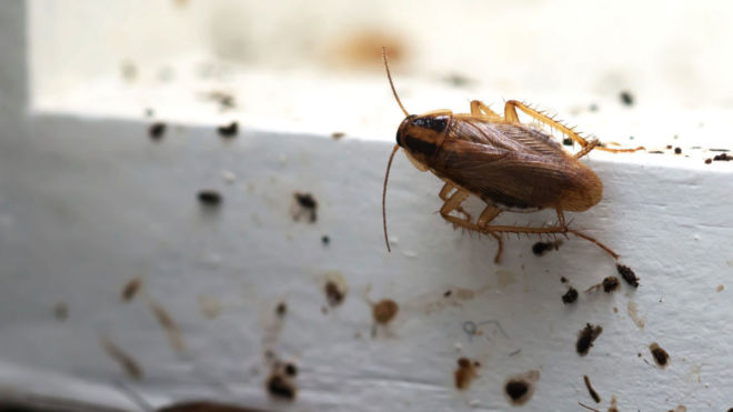 Cockroach Infestation Warning Signs and What to Do About Them